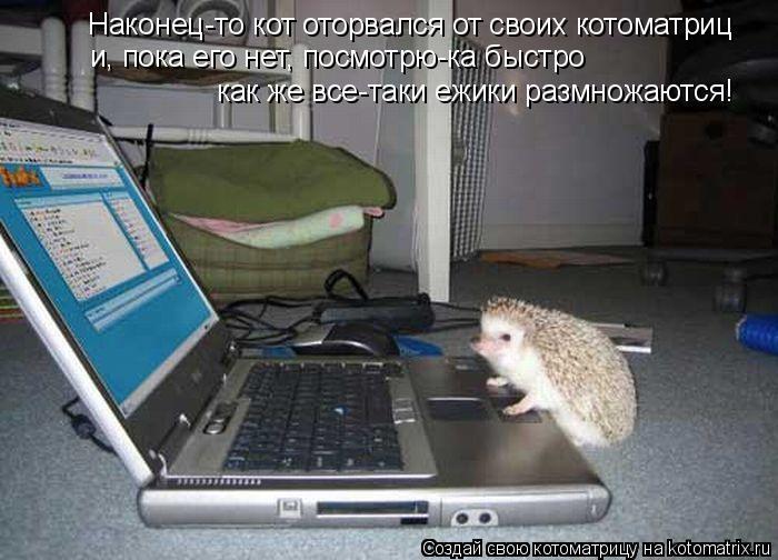Котоматрица: Наконец-то кот оторвался от своих котоматриц и, пока его нет, посмотрю-ка быстро  как же все-таки ежики размножаются!