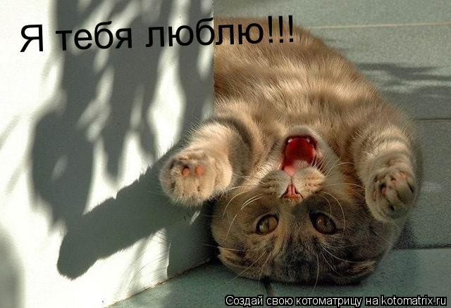 Котоматрица: Я тебя люблю!!!