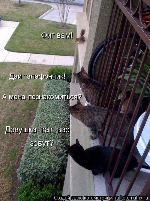 Котоматрица: Дэвушка, как  вас зовут? А мона познакомиться? Дай тэлэфончик! Фиг вам!