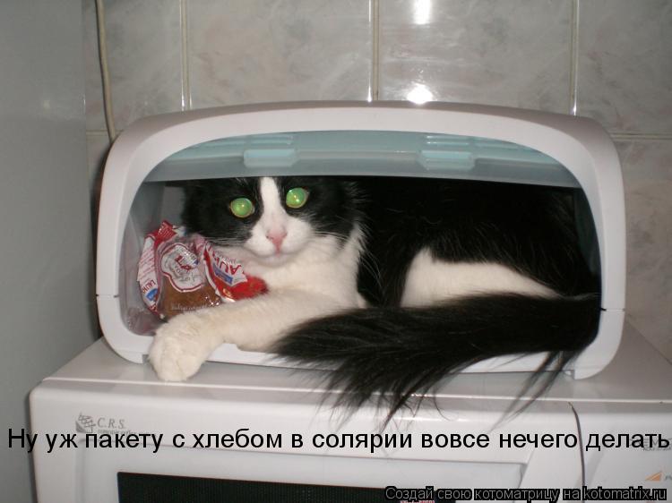 Котоматрица: Ну уж пакету с хлебом в солярии вовсе нечего делать!