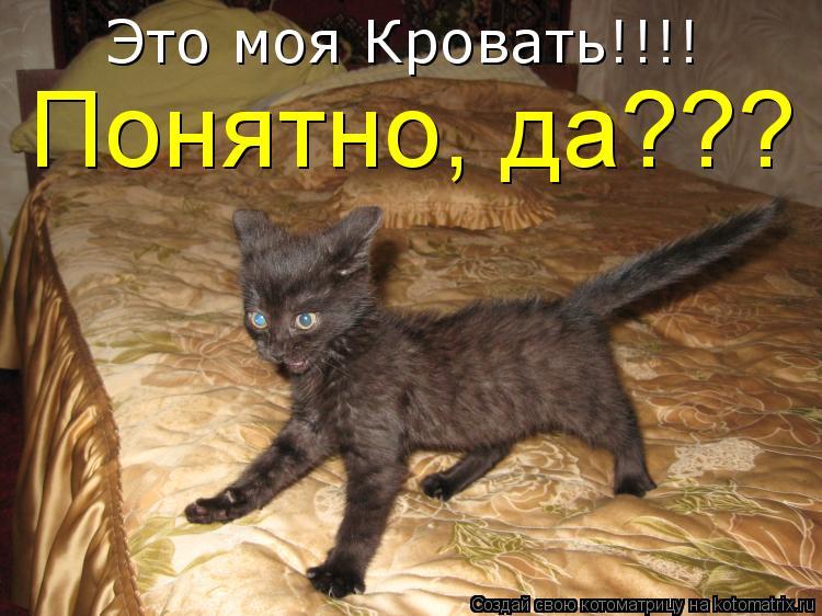 Котоматрица: Это моя Кровать!!!! Понятно, да???