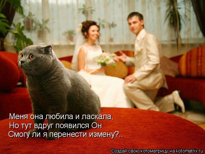 Котоматрица: Меня она любила и ласкала, Но тут вдруг появился Он Смогу ли я перенести измену?..