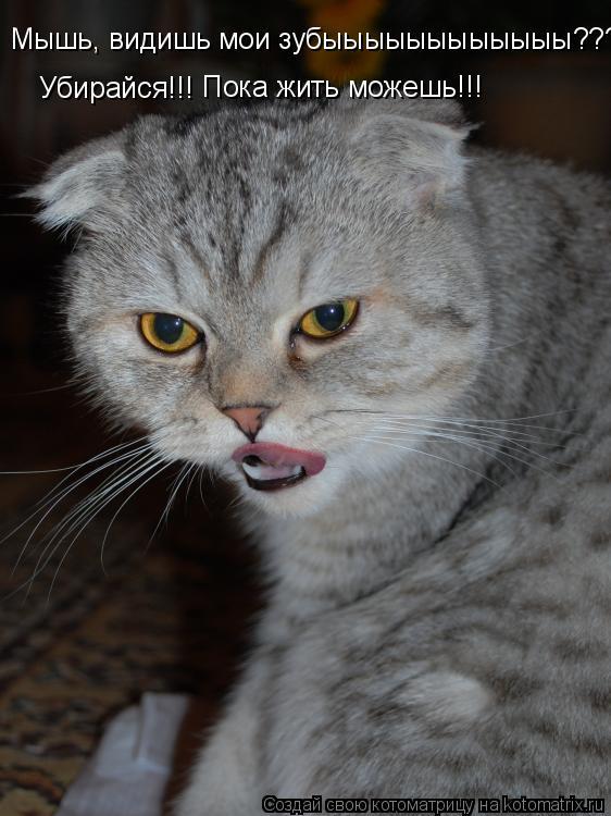 Котоматрица: Мышь, видишь мои зубыыыыыыыыыыыы??? Убирайся!!!   Пока жить можешь!!!