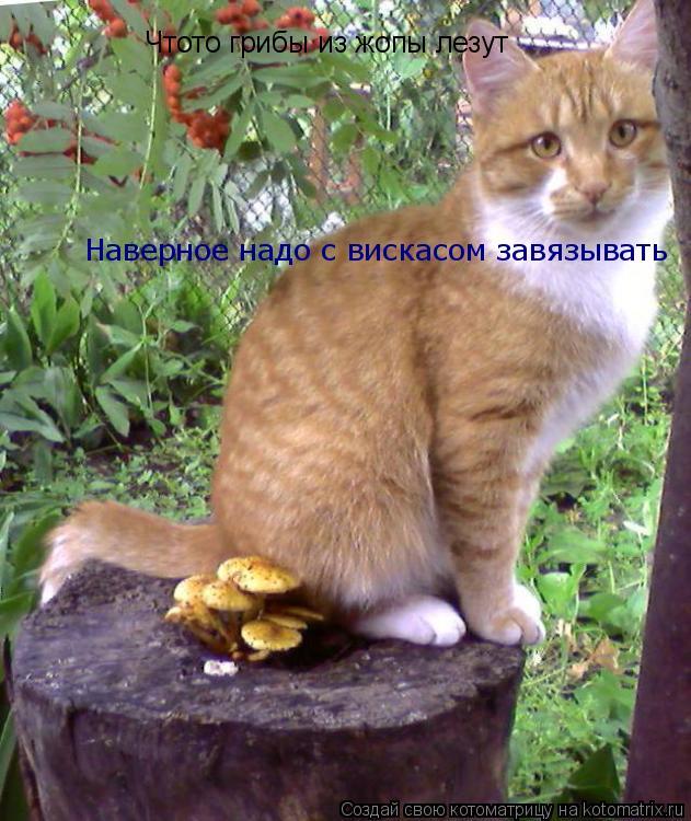 Котоматрица: Чтото грибы из жопы лезут Наверное надо с вискасом завязывать