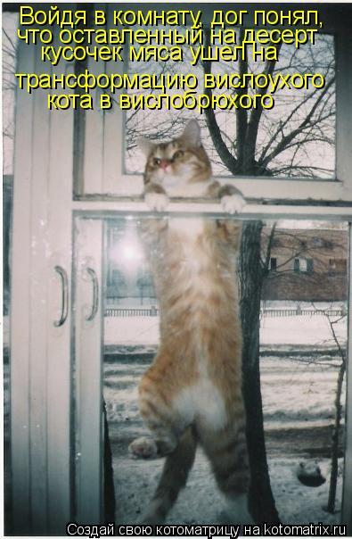 Котоматрица: Войдя в комнату, дог понял,  что оставленный на десерт  кусочек мяса ушел на   трансформацию вислоухого  кота в вислобрюхого