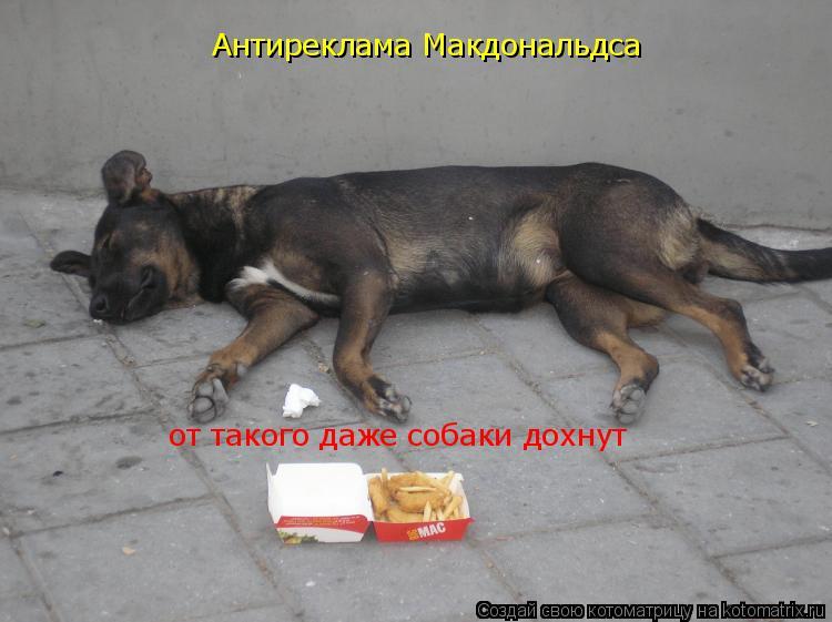 Котоматрица: Антиреклама Макдональдса от такого даже собаки дохнут
