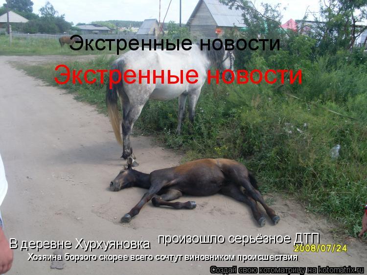 Котоматрица: В деревне Хурхуяновка произошло серьёзное ДТП Хозяина борзого скорее всего сочтут виновником происшествия Экстренные новости Экстренные