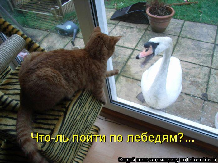 Котоматрица: Что-ль пойти по лебедям?...