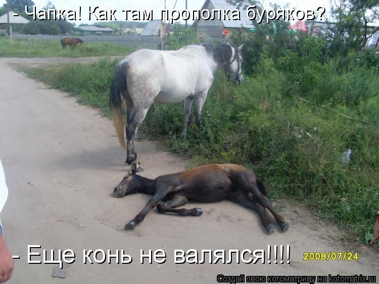 Котоматрица: - Чапка! Как там прополка буряков? - Еще конь не валялся!!!!