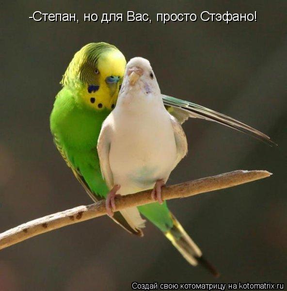 Котоматрица: -Степан, но для Вас, просто Стэфано!