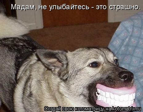Котоматрица: Мадам, не улыбайтесь - это страшно.