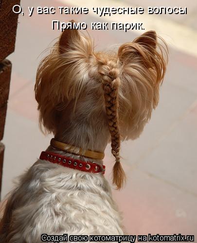 Котоматрица: О, у вас такие чудесные волосы  Прямо как парик.