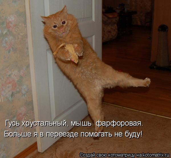 Котоматрица: Гусь хрустальный, мышь  фарфоровая.  Больше я в переезде помогать не буду!
