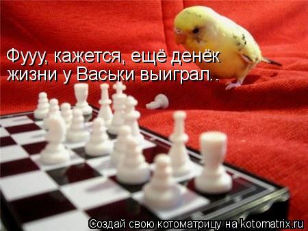 Котоматрица: жизни у Васьки выиграл.. Фууу, кажется, ещё денёк