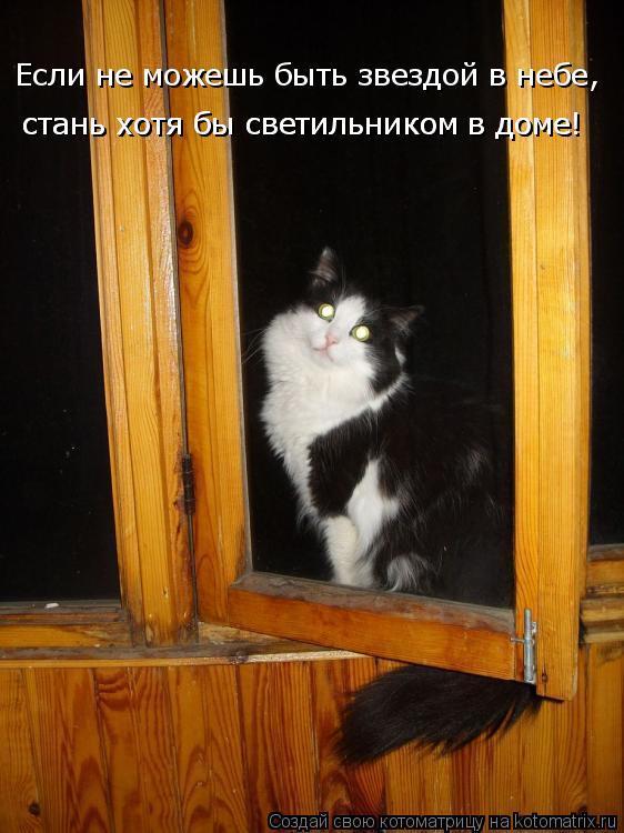 Котоматрица: Если не можешь быть звездой в небе,  стань хотя бы светильником в доме! стань хотя бы светильником в доме!