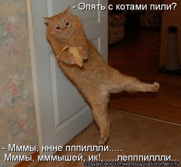 Котоматрица: - Опять с котами пили? - Мммы, ннне пппиллли..... Мммы, мммышей, ик!, ....лепппиллли...