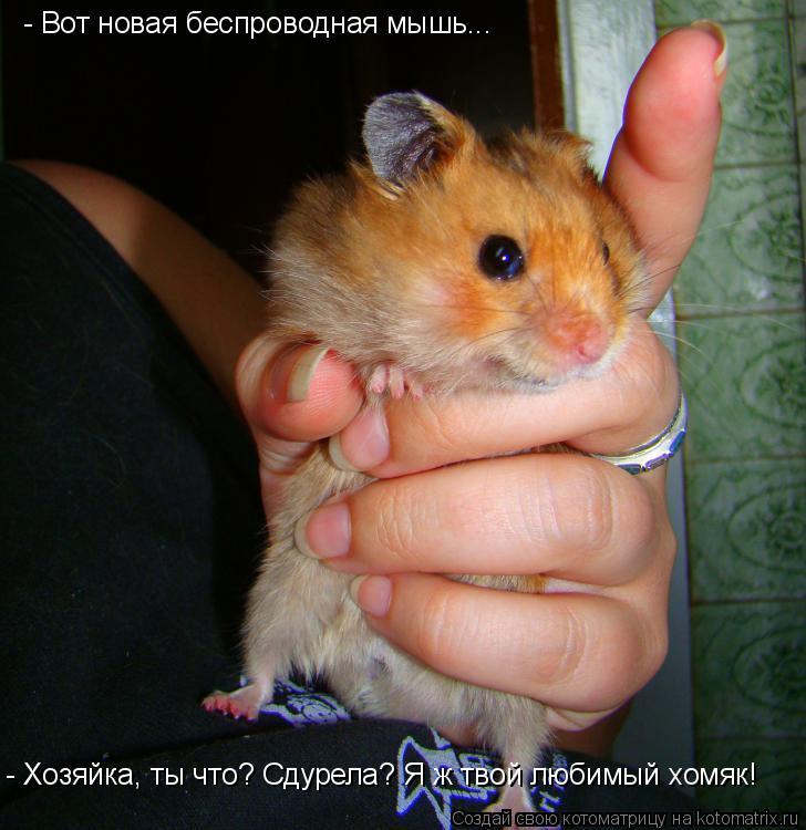 Котоматрица: - Вот новая беспроводная мышь... - Хозяйка, ты что? Сдурела? Я ж твой любимый хомяк!