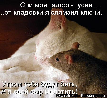 Котоматрица: Спи моя гадость, усни.... ..от кладовки я слямзил ключи.. Утром тебя будут бить, А я свой сыр молотить!