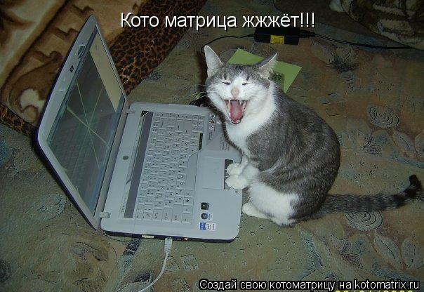 Котоматрица: Кото матрица жжжёт!!!
