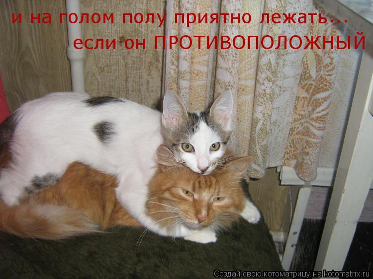 Котоматрица: и на голом полу приятно лежать если он ПРОТИВОПОЛОЖНЫЙ ... ...