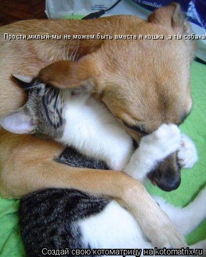 Котоматрица: Прости,милый-мы не можем быть вместе я кошка ,а ты собака!