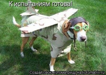 Котоматрица: К испытаниям готова!