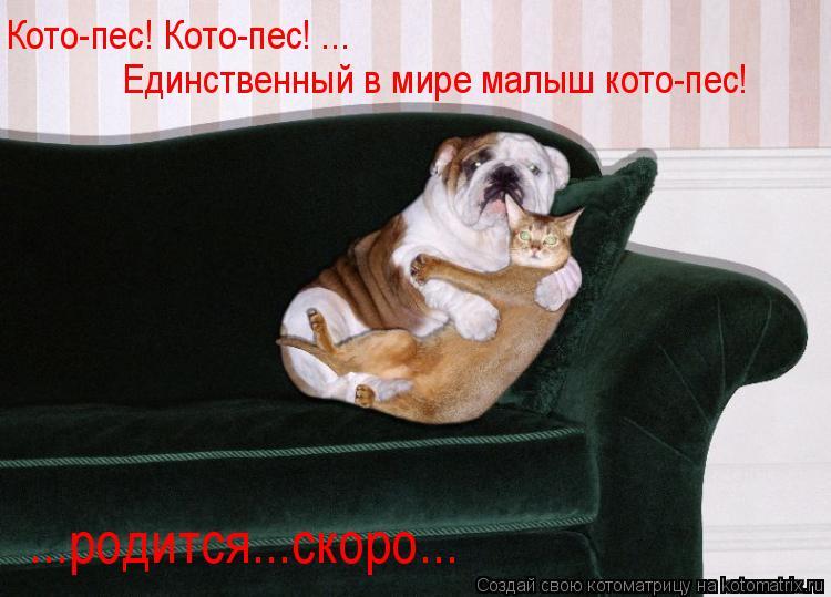Котоматрица: Кото-пес! Кото-пес! ... Единственный в мире малыш кото-пес! ...родится...скоро...