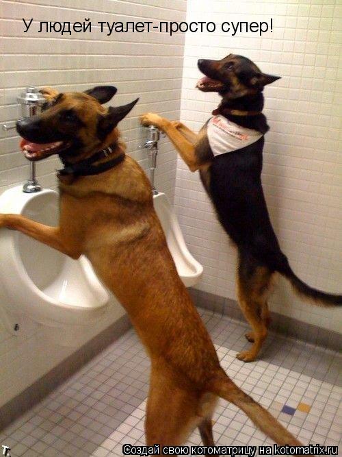 Котоматрица: У людей туалет-просто супер!