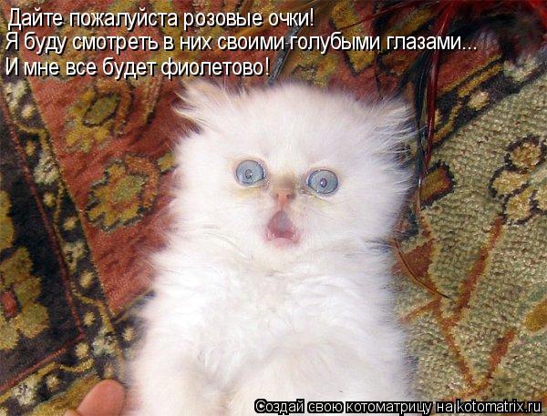 Котоматрица: Дайте пожалуйста розовые очки! Я буду смотреть в них своими голубыми глазами... И мне все будет фиолетово!