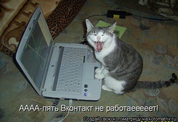 Котоматрица: АААА-пять Вконтакт не работаееееет!