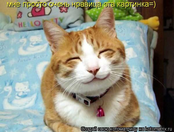 Котоматрица: мне просто очень нравица эта картинка=)