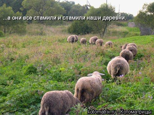 Котоматрица: ...а они все спамили и спамили наши деревни.