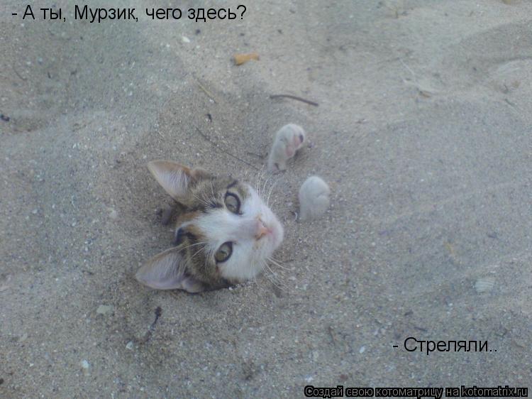 Котоматрица: - А ты, Мурзик, чего здесь? - Стреляли..