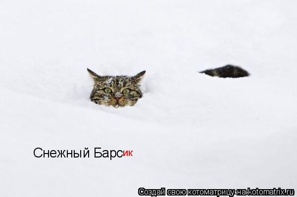 Котоматрица: Снежный Барс ик