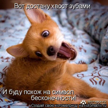 Котоматрица: Вот достану хвост зубами И буду похож на символ  бесконечности!