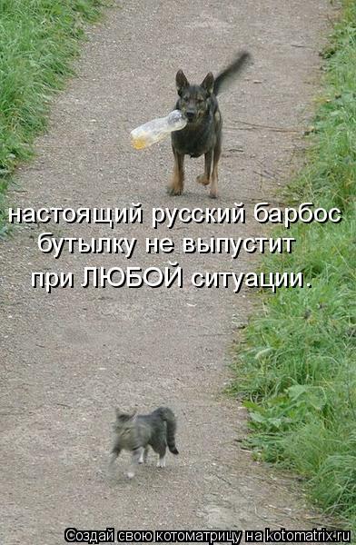Котоматрица: настоящий русский барбос бутылку не выпустит при ЛЮБОЙ ситуации.