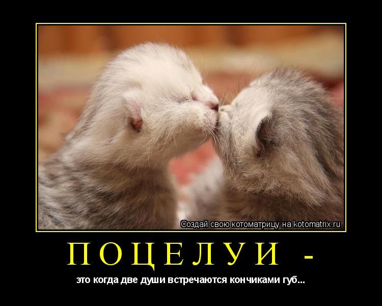 Котоматрица: ПОЦЕЛУИ - это когда две души встречаются кончиками губ...