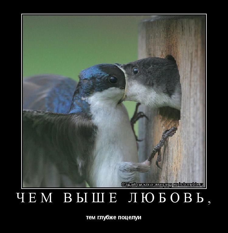 Котоматрица: ЧЕМ ВЫШЕ ЛЮБОВЬ, тем глубже поцелуи