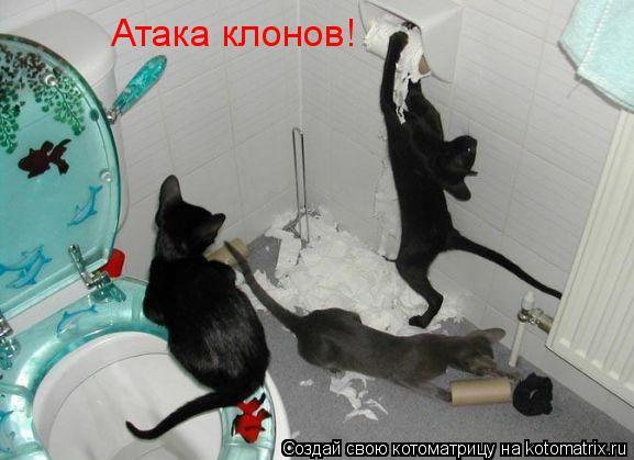 Котоматрица: Атака клонов!