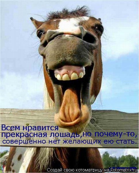 Котоматрица: Всем нравится прекрасная лошадь, но почему-то, совершенно нет желающих ею стать.
