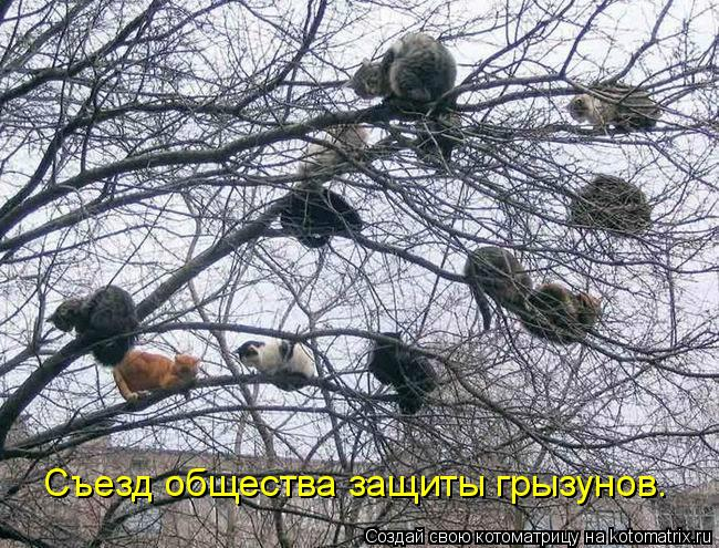 Котоматрица: Съезд общества защиты грызунов.