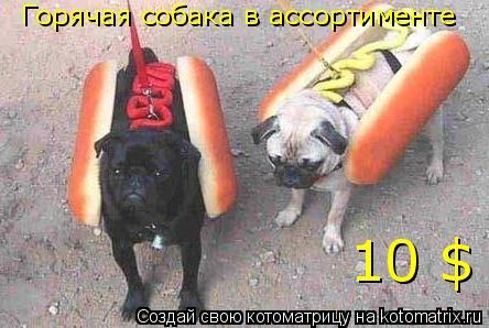 Котоматрица: Горячая собака в ассортименте 10 $