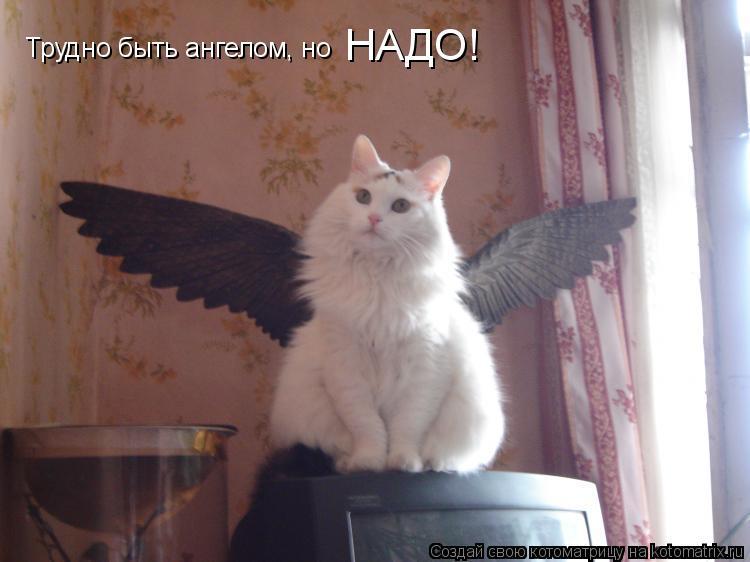 Котоматрица: Трудно быть ангелом, но  НАДО!