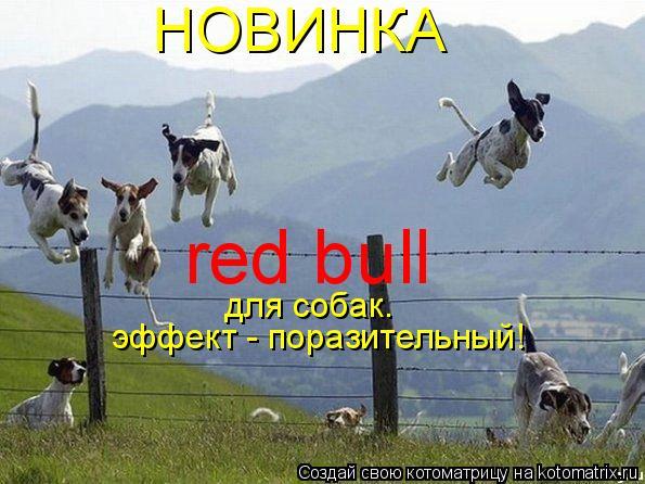 Котоматрица: НОВИНКА red bull  для собак. эффект - поразительный!