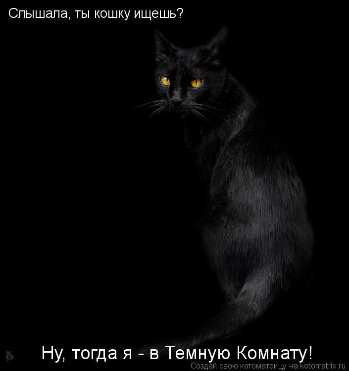 Котоматрица: Слышала, ты кошку ищешь? Ну, тогда я - в Темную Комнату!