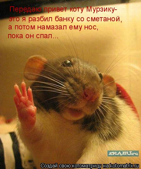 Котоматрица: Передаю привет коту Мурзику- это я разбил банку со сметаной , а потом намазал ему нос, пока он спал...