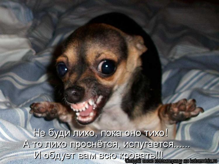 Котоматрица: Не буди лихо, пока оно тихо! А то лихо проснётся, испугается...... И обдует вам всю кровать!!!