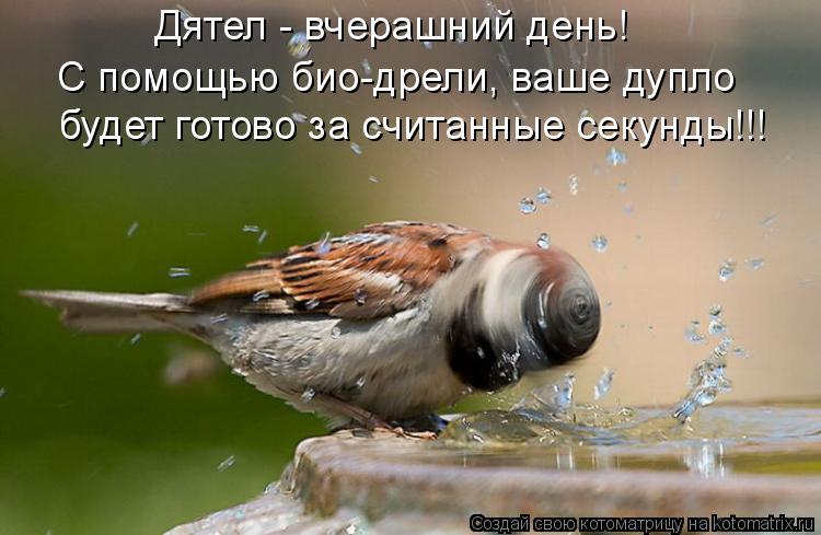 Котоматрица: Дятел - вчерашний день! С помощью био-дрели, ваше дупло  будет готово за считанные секунды!!!