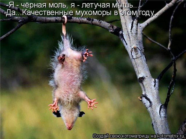 Котоматрица: -Я - чёрная моль, я - летучая мышь... -Да...Качественные мухоморы в этом году...