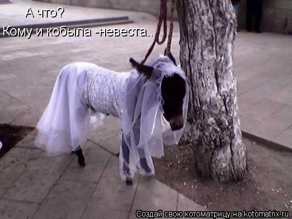 Котоматрица: А что? Кому и кобыла -невеста..
